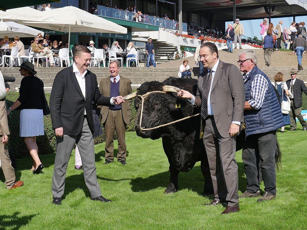 DFB-Präsident Reinhard Grindel (links), Zuchtbulle Elton (Mitte), Gregor Baum (rechts, Präsident des Hannoverschen Rennvereins und Vorstandsmitglied von Hannover 96). Foto: Kassandro
